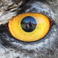 eagle-owl2