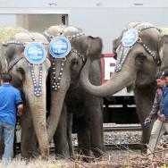 elephants5