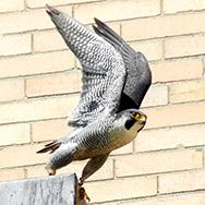 falcons-armory17