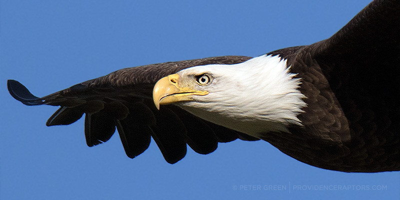eaglesnest16